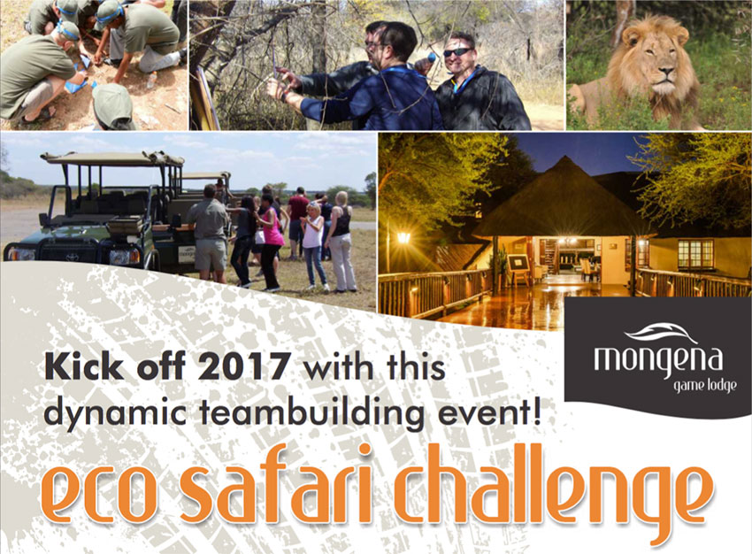 Eco Safari Team Building